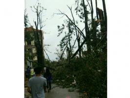 莫兰蒂台风灾后的归来园附近_集美龙舟池