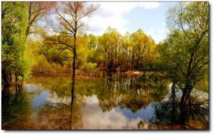 洋麻山森林公园 (2)_洋麻山森林公园