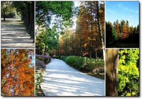洋麻山森林公园 (6)_洋麻山森林公园