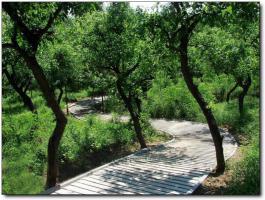 洋麻山森林公园 (4)_洋麻山森林公园