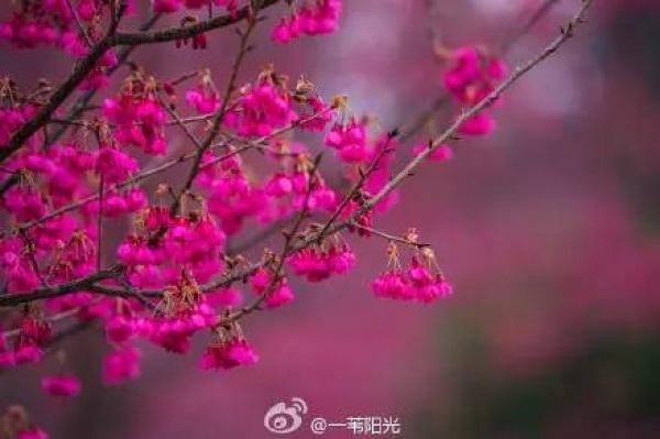 厦门春节赏花攻略在这!被问了几万遍,收藏好一个个玩过去~