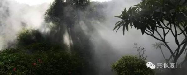 就在海沧,此地四季花海、云雾缭绕,宛如仙境!你去过吗?