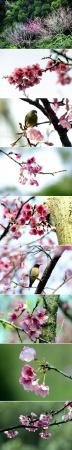 今年春天,厦门这里的樱花最好看!赏花指南getit!附:春季赏花拍照技巧