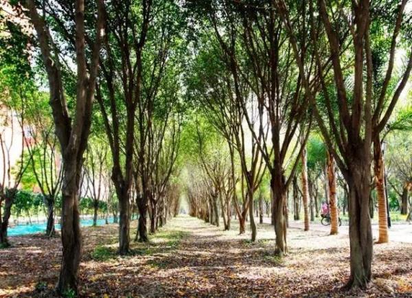 厦门新增这么多公园,快看看有你家附近的吗!?