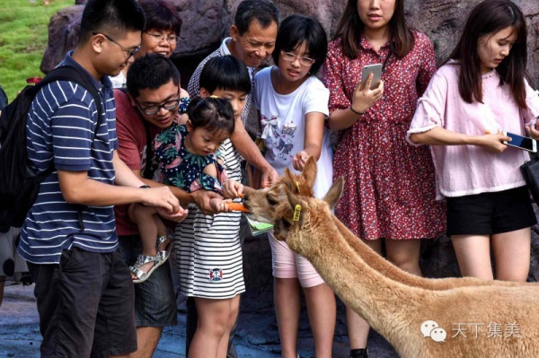 今天,厦门灵玲国际马戏城华丽回归,动物王国敞开大门!