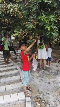 翔安内厝有个水果观光园,你知道吗?