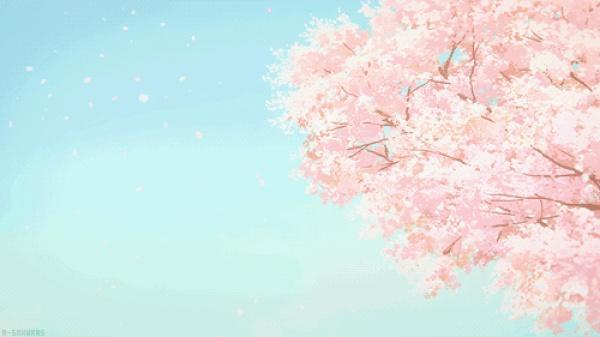 三月将至,花开当时,赏樱之行要提上日程了!