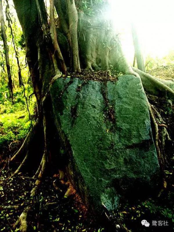 发现厦门:悄无人迹的古松林遗址