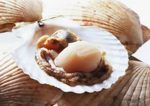 紧急提醒!漳州36人食用贝类海产品中毒!近期食用海鲜千万要注意!