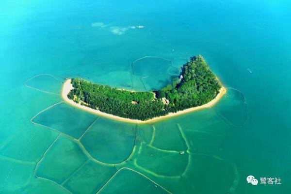 重磅:厦门鳄鱼屿惊现一只小海龟畅游大海,您知道它是什么龟吗