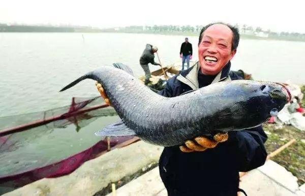 吃了这么多年鱼,你可能不知道这6种鱼最好不要吃